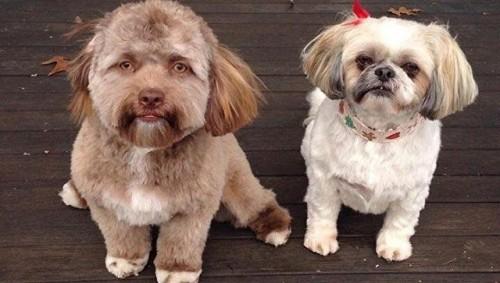 Пользователей соцсетей удивило фото собаки с человеческим лицом