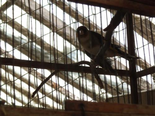 Осужденного за ненадлежащее обращение с редкими птицами предпринимателя досрочно освободили от наказания в ЮКО