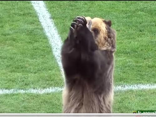 Медведь открыл футбольный матч в России