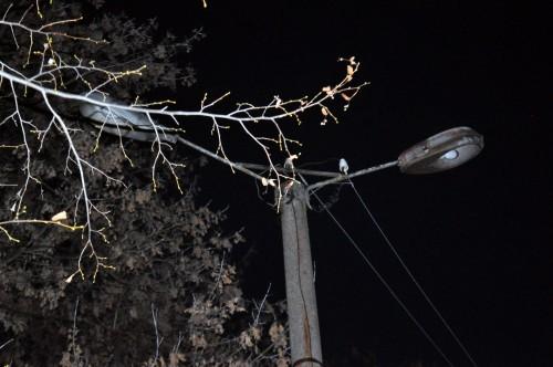 В Мактааральском районе ЮКО стали массово гаснуть уличные фонари