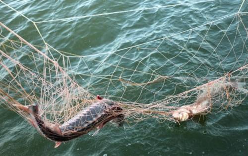 За рыбалку в нерест браконьеры в ВКО «рассчитались» сетями и лодкой