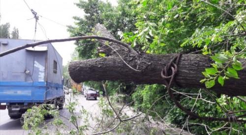 На мужчину упало дерево в Алматы