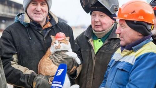 Путина обскакал котик