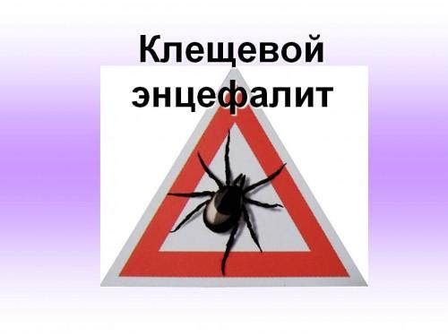 Статистика по пострадавшим от укусов клещей в Казахстане неумолимо растет