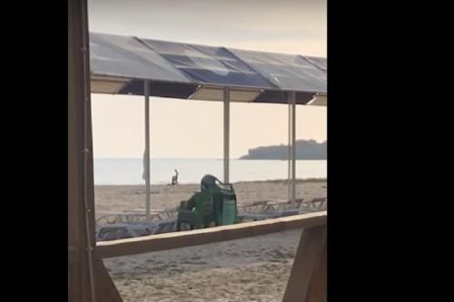Полиция разыскивает героев снятого на пляже в Актау видео
