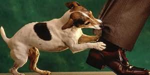 В Зыряновске хозяин собаки, укусившей женщину, заплатит пострадавшей круглую сумму