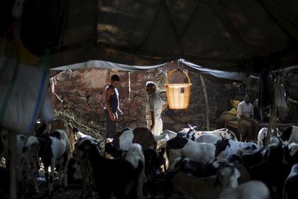 Индусы насмерть забили мусульманина из-за коровы