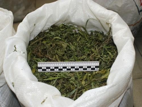Свыше 47 кг марихуаны изъяли у двух наркосбытчиков в Усть-Каменогорске