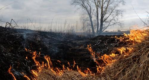 Крупный пожар в природном резервате близ Атырау тушат третий день – видео