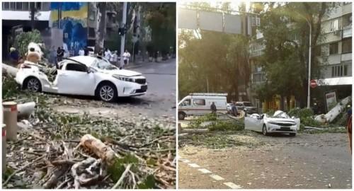 Огромное дерево рухнуло на авто с людьми в центре Алматы (фото, видео)