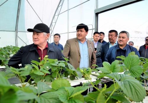 В Актобе введут в эксплуатацию ряд проектов по импортозамещению продуктов питания