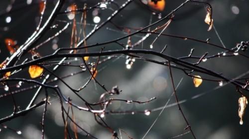 Дожди и похолодание ожидаются на севере и в центре Казахстана
