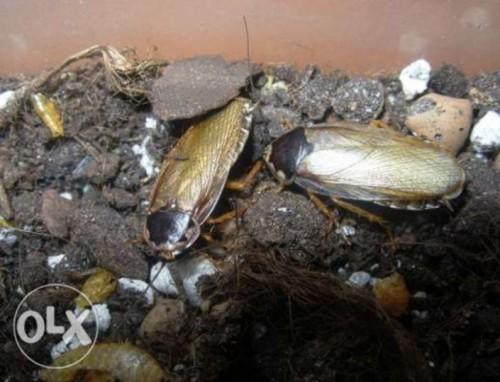 Казахстанцы продают тараканов в Интернете