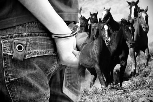 В Туркестанской области обезвредили крупную банду скотокрадов