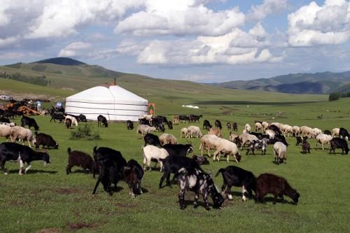 В Туркестанской области растет поголовье сельскохозяйственных животных