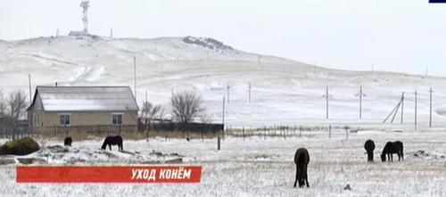 В Акмолинской области исчезли 200 лошадей вместе с табунщиком