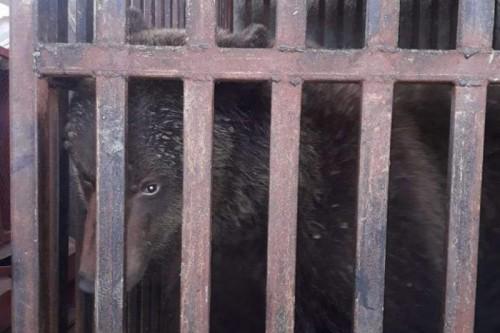 Медведь в центре Алматы: стали известны хозяева животного