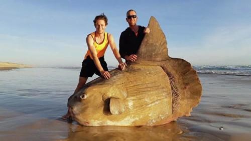 В Австралии рыбаки сделали фото гигантской рыбы