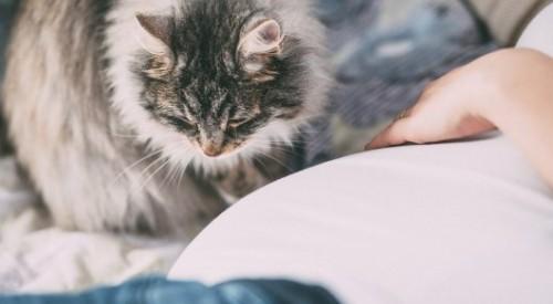 Ученые нашли способ полностью вылечить аллергию на кошек