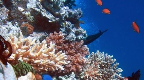 ОАЭ начали создание крупнейшего искусственного кораллового рифа