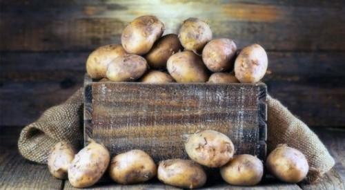 Трое мужчин умерли из-за гнилой картошки в Акмолинской области