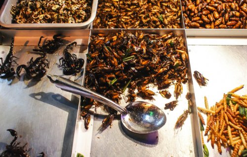 В ООН рассказали о пользе еды из насекомых