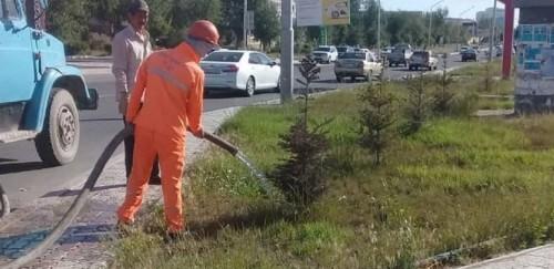 Актаусцам предлагают за свой счет поливать деревья внутри микрорайонов