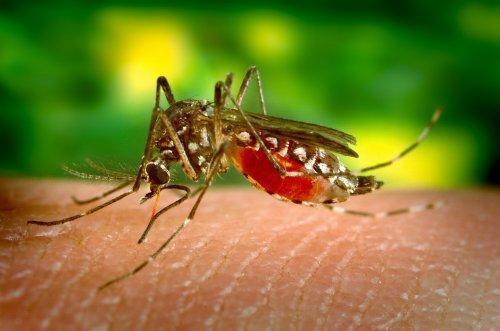 Как выбрать средство от насекомых
