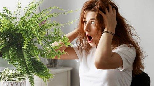 Комнатные растения не очищают воздух. Ученые знают, как это исправить