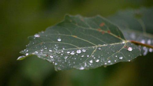 На большей части Казахстана 18 июня пройдут дожди