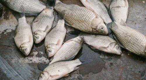 Дарига Назарбаева о гибели рыбы в Урале: С самого начала было понятно, кто виноват