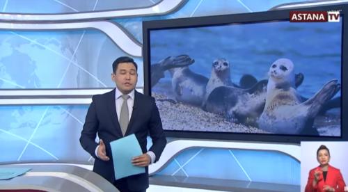 Для защиты каспийского тюленя создадут специальную охраняемую природную зону