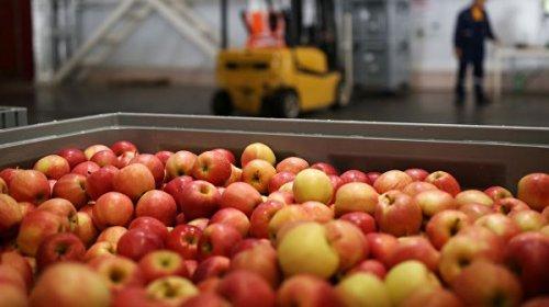 Врач рассказал, чем могут быть опасны яблоки и груши для аллергиков
