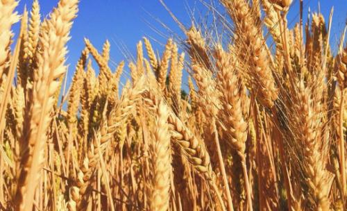 Казахстан и ИОБП планируют создание Зернового банка