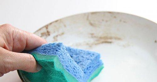 В кухонных губках обнаружили армию полезных вирусов, пожирающих бактерии