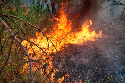 Раскрыты катастрофические последствия пожаров в Сибири