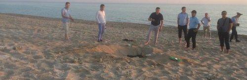 На пляже в Актау лошадь нашла человеческие останки