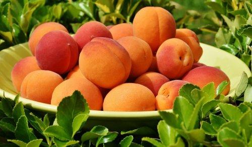 Эксперт: В жару нужно есть фрукты и ягоды с высоким содержанием калия