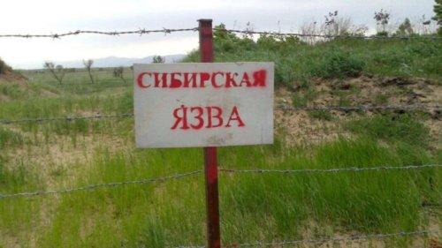 Cкотомогильник со спорами сибирской язвы обнаружили саперы возле Арыси