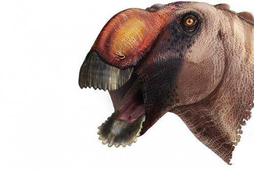 Учёные нашли новый вид динозавра с необычным клювом