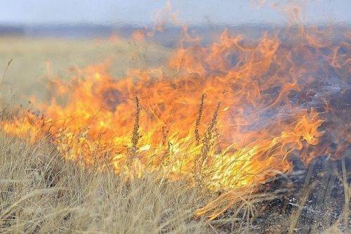 С начала года на территории Казахстана зарегистрировано 296 лесных пожаров
