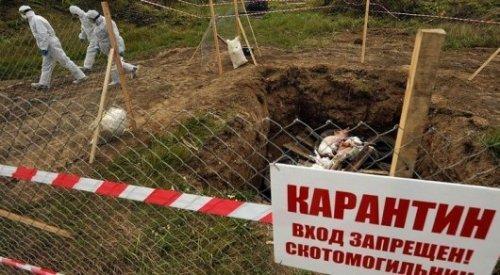 В скотомогильниках Арыси сибирской язвы нет - акимат
