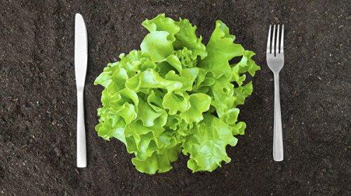 Эксперт рассказала о пользе листьев салата с горьким привкусом