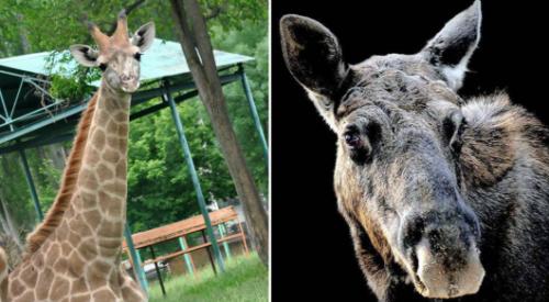 В зоопарке Алматы назвали виновных в гибели шести животных