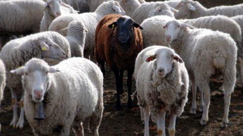 В ЗКО задержали подозреваемых в серии краж скота