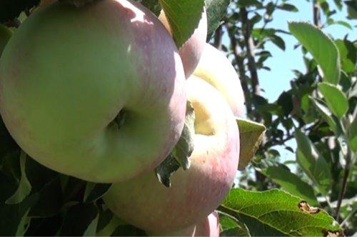 В Шымкенте дал первые плоды  общественный сад