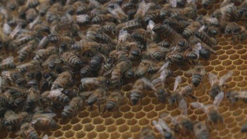 Пчеловоды Актюбинской области получат субсидии