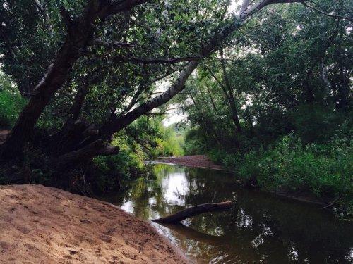 Волонтеры  Актобе нашли завал из свежесрубленных деревьев, сваленных в карьер для туризма