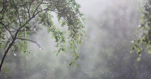 На севере, востоке и центре Казахстана пройдут дожди с грозами