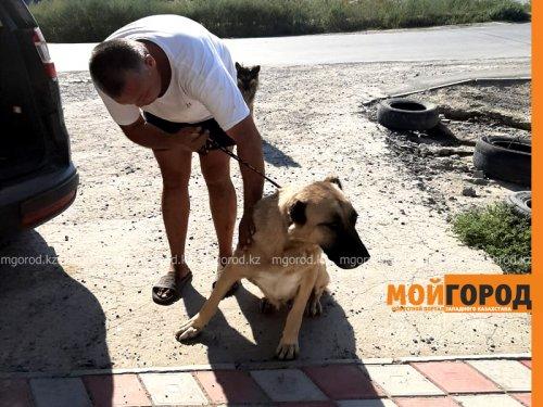 История атырауской Хатико: собака неделю ждала хозяев в степи